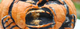 Decomposing pumpkin