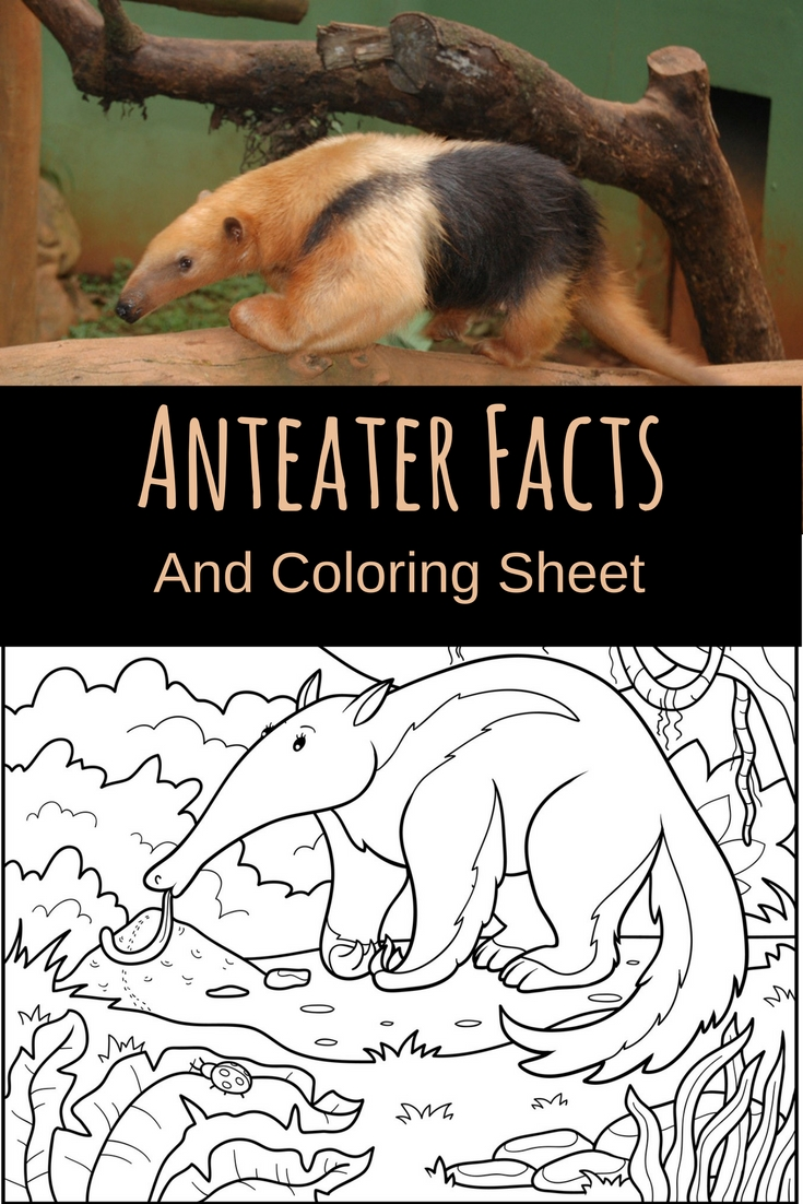 Teach your child about anteaters with the help of these fun facts about anteaters and a coloring page for even more fun!