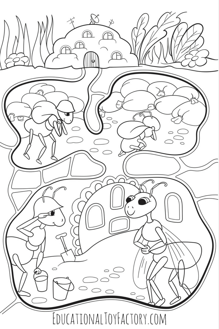 Ant Colony Coloring Page | Coloring Pages