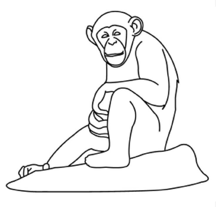 chimpanzee printable page
