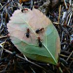 Learn About Ants For Kids