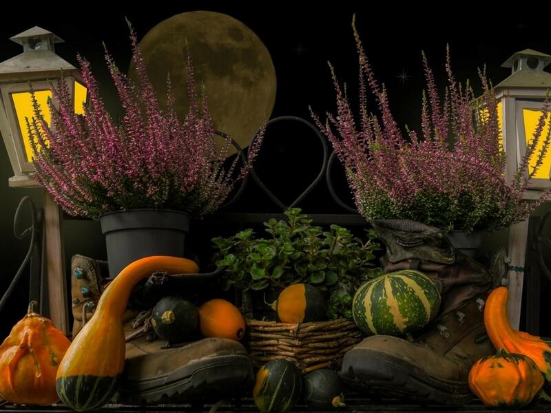 harvest moon for kids