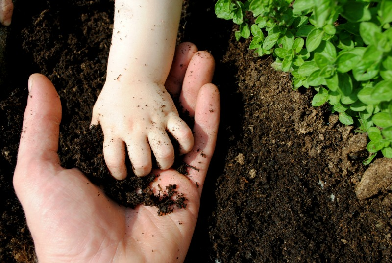 The hands of a father and daughter playing with garden soil