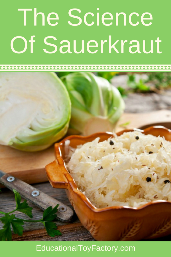 The Science Of Sauerkraut