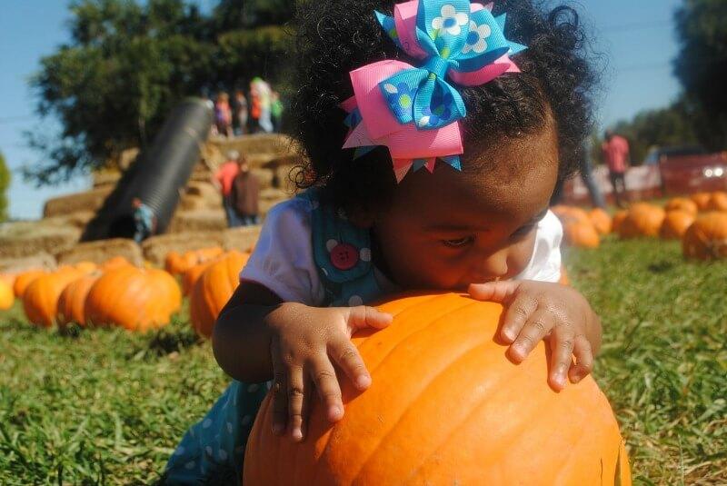 Little girl hugging a pumpkin on a pumpkin patch